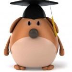 Bachelor à Montpellier